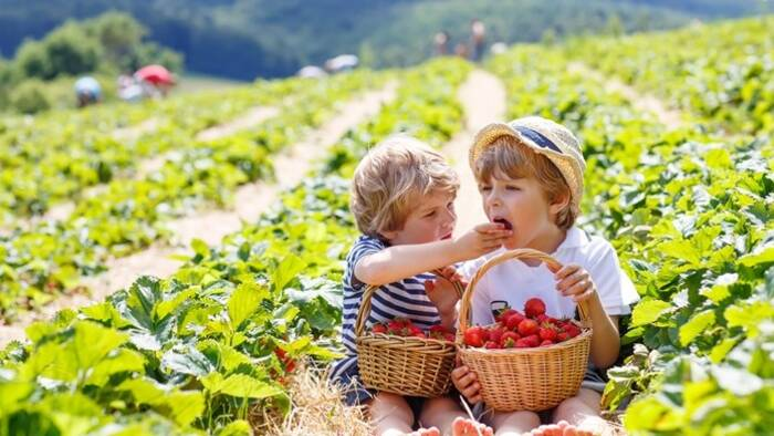 Where to eat strawberries in Microregion 11 PLUS and surroundings?-2