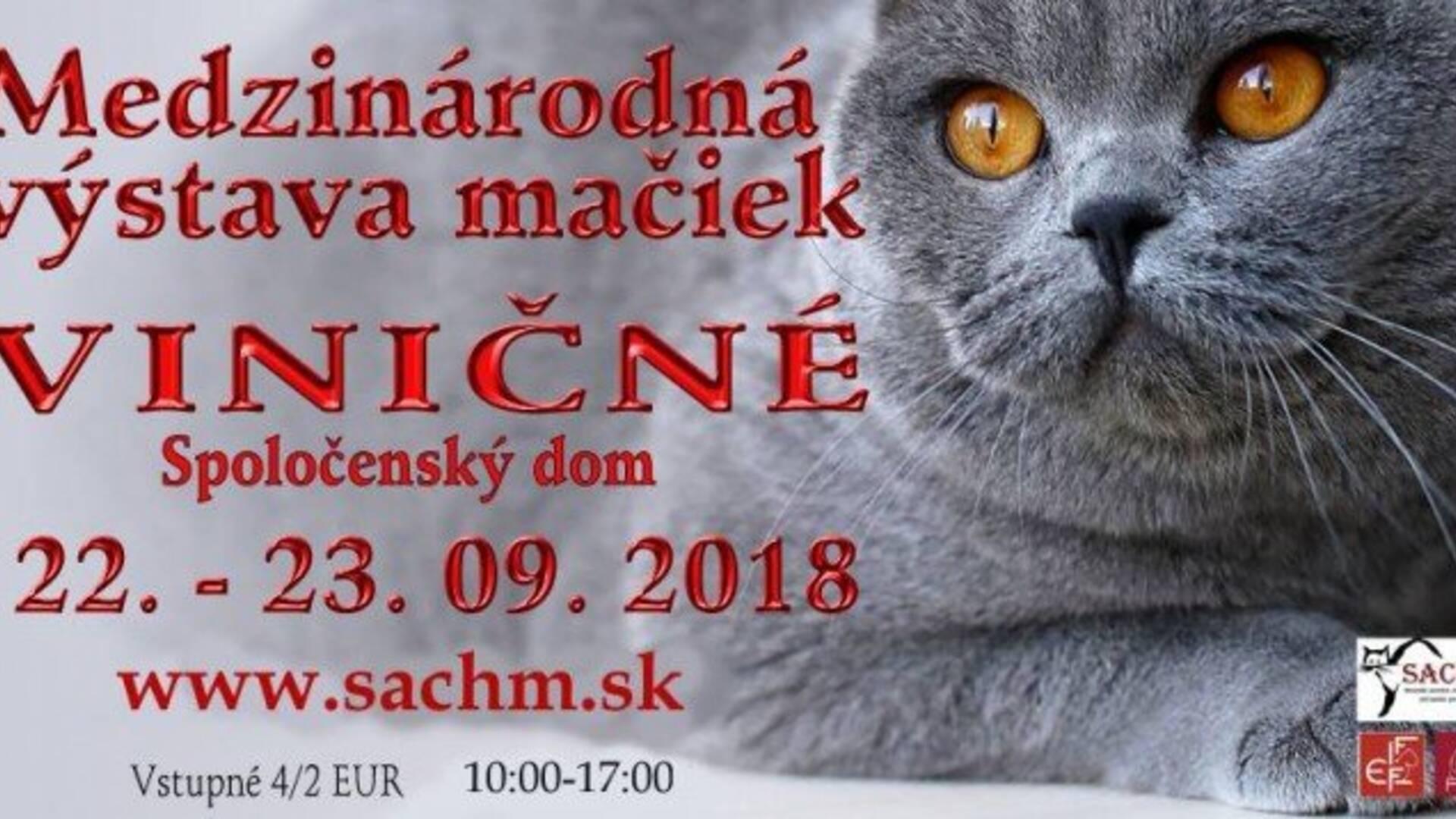 Medzinárodná výstava mačiek - Viničné  6a47963cc75